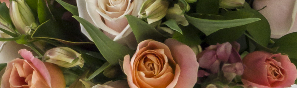 Bays Flowers Roses